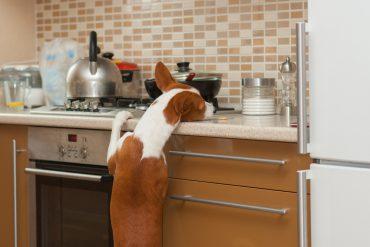 hond leren gehoorzamen