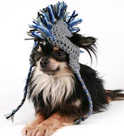 Een Muts Voor Je Hond Dieren Rubriek