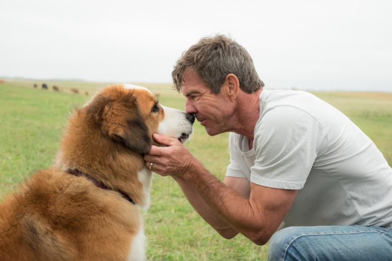 films met honden