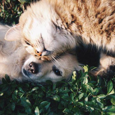 vriendschap tussen hond en kat