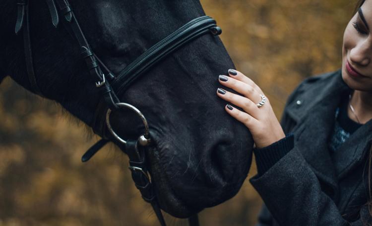 paarden benodigdheden
