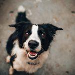 slimste hond