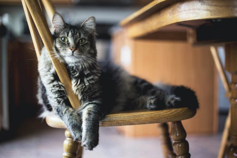 hoe blijft je kat gezond