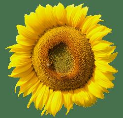 zonnebl