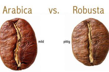 verschil arabica en robusta