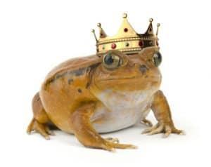 kikker wordt prins
