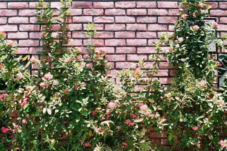 privacy in tuin