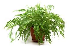 planten voor schone lucht