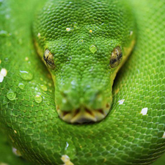 slangendag